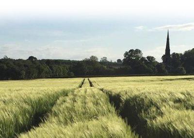 ticknall-field